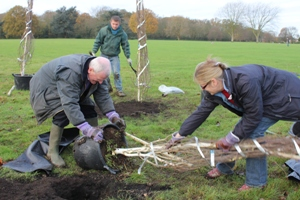 Planting trees in Cheam Park Dec 2011